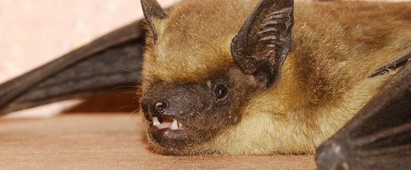 New Jersey bat control