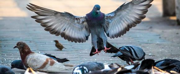 New Jersey bird control